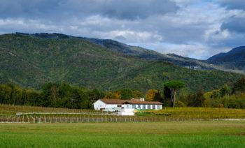 Azienda agricola Tenimenti Civa S.r.l e Ribolla Gialla